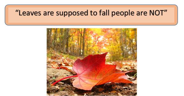 12-13-16_falls-image